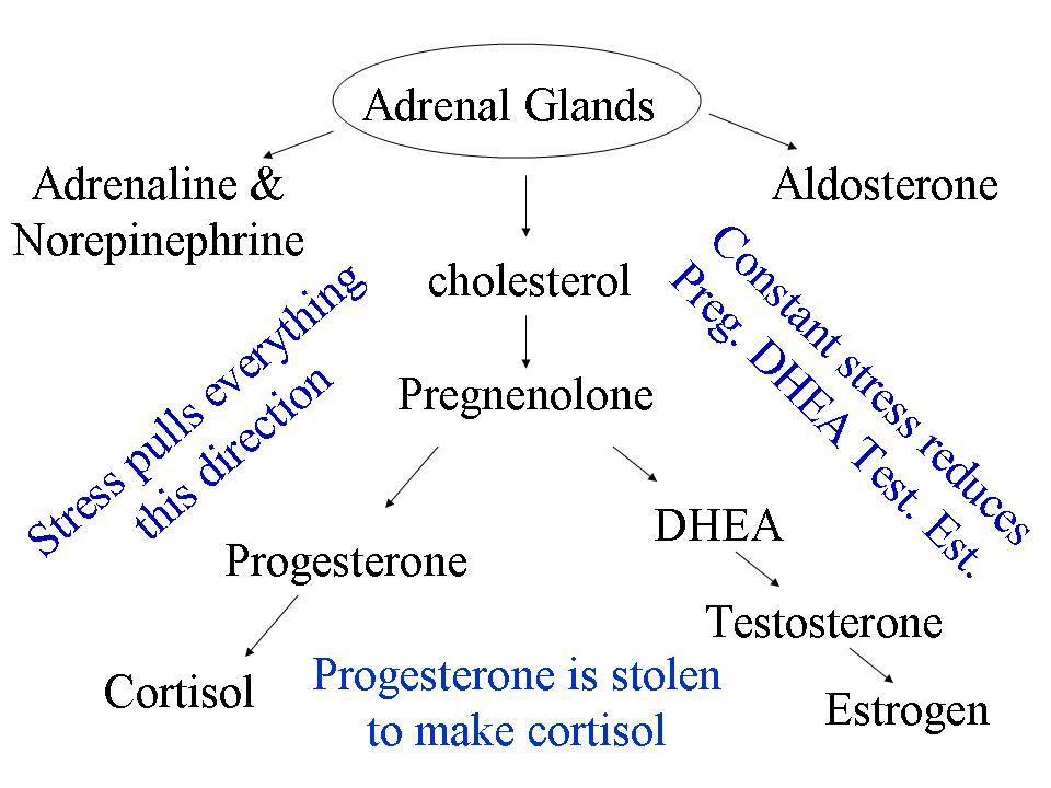 low testosterone due to stress